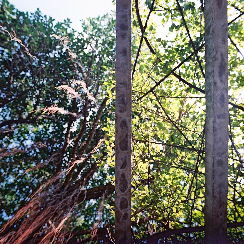 Barred skies - Shot on Kodak Portra 400 at EI 400. Color negative film in 120 format shot as 6x6.