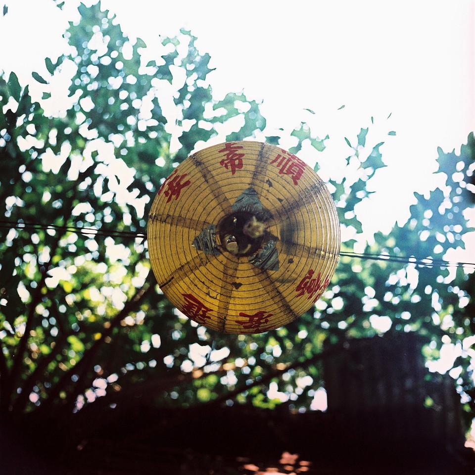 Underside - Shot on Kodak EKTACHROME E200 at EI100. Color reversal (slide) film in 120 format shot as 6x6. Expired and cross processed.